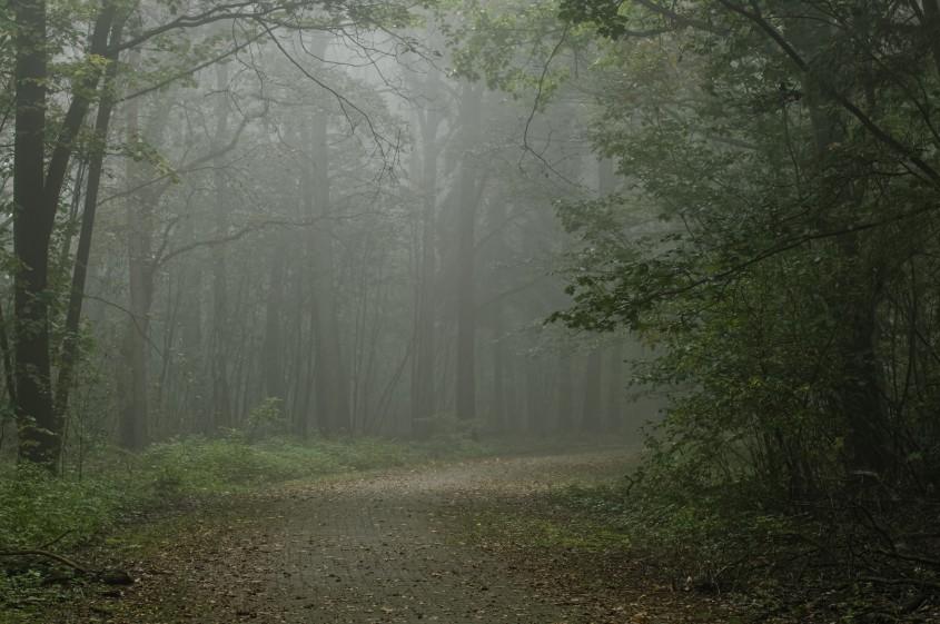 Oktobernebel